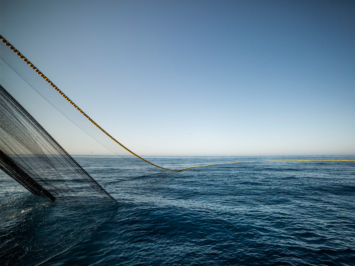 Desde 2003 hemos reducido nuestra capacidad pesquera, primando la eficiencia y la menor huella de carbono de nuestros barcos, y apostando por la ultracongelación a bordo.