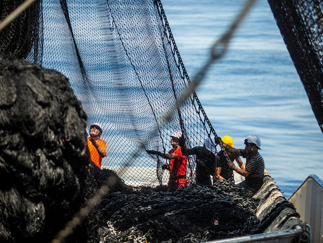 Operamos en el Océano Índico dentro de la IOTC (Comisión del Atún del Océano Índico), con un 100% de cobertura de observadores independientes a bordo, que auditan la labor de nuestros profesionales de la mar.